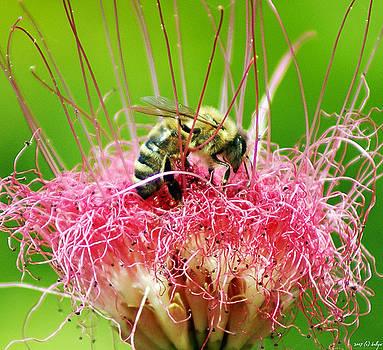Holly Kempe - Busy Bee