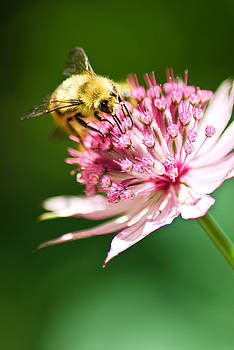 Busy Bee by Kimberly Deverell