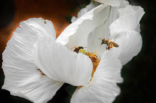 Busy bees by Jeff Burgess