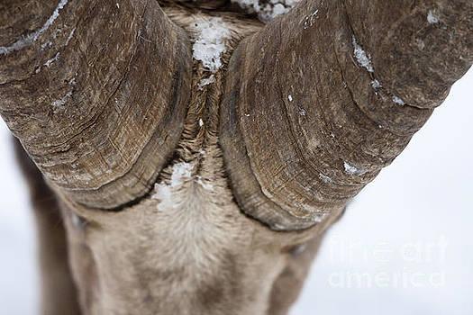 Butt -Heads by Douglas Kikendall