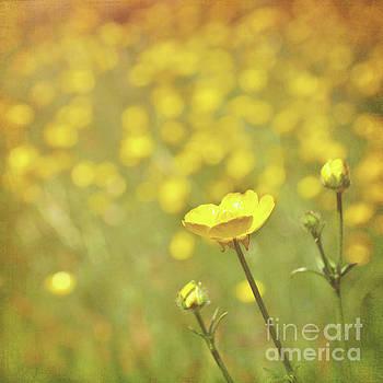 Buttercups by Lyn Randle