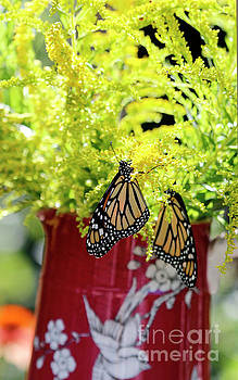 Butterflies and Goldenrod Flowers by Luana K Perez
