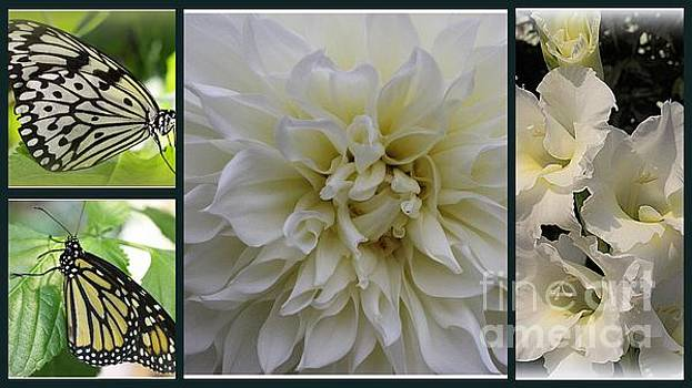 Butterflies and White Summer Blossoms - A Collage by Dora Sofia Caputo Photographic Art and Design