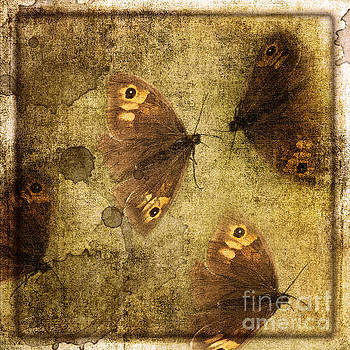 Butterflies by Liz Alderdice
