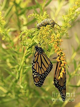 Butterflies on Flowers with Caterpillar Photo by Luana K Perez