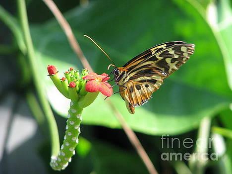 Butterfly 2 by Michael Krek