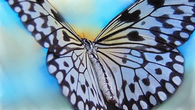 Butterfly by Alina Kurkierewicz