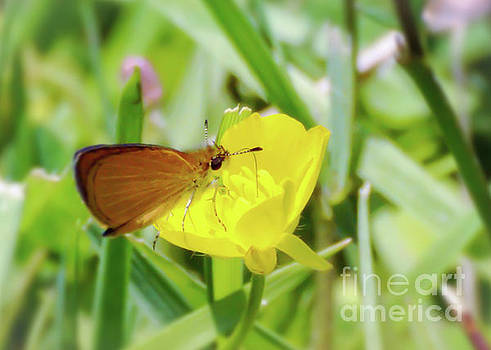 Butterfly and Buttercup by Kerri Farley
