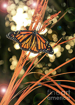Butterfly and Fairy Lights Photo by Luana K Perez
