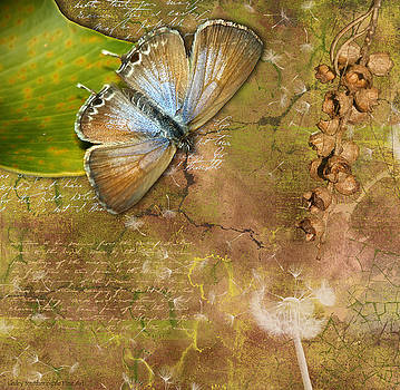 Butterfly and Seed Pods by Lesley Smitheringale