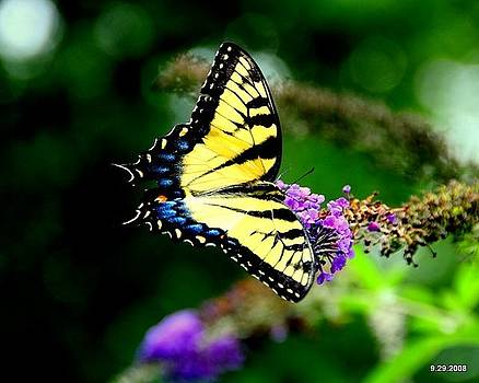 Butterfly by Aron
