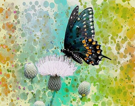 Butterfly Art by Barbara Chichester