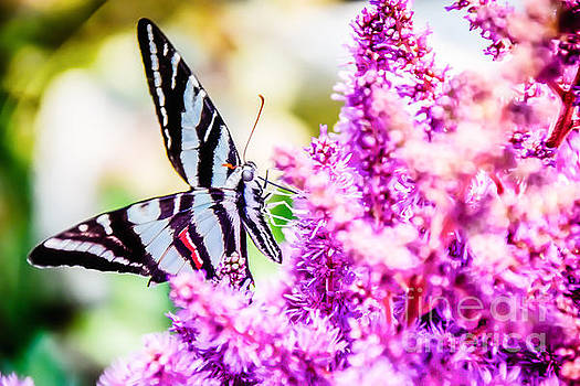 Butterfly Beautiful  by Peggy  Franz