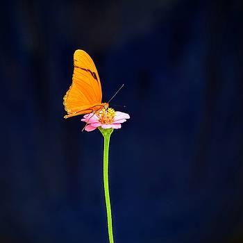 Butterfly Bloom by Mary Zeman