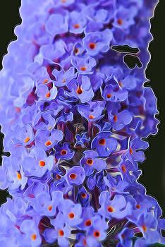 Cindy Boyd - Butterfly Bush Flowers