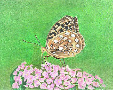 Butterfly Bush by Troy Levesque