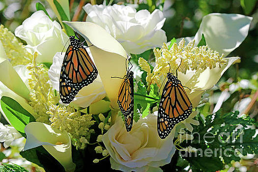 Butterfly Church on Earth by Luana K Perez