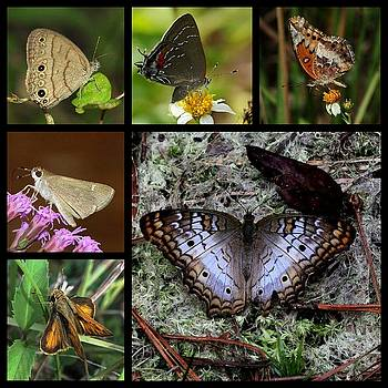 Butterfly Collage 1 by April Wietrecki Green