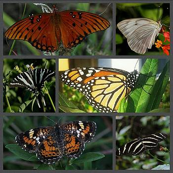Butterfly collage 2  by April Wietrecki Green