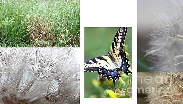Butterfly Collage  by AR Annahita