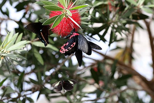 Butterfly Crowd by David Yunker