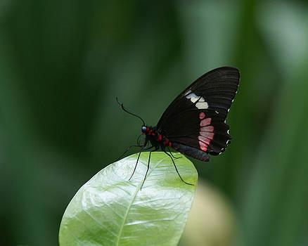 Butterfly by D Winston