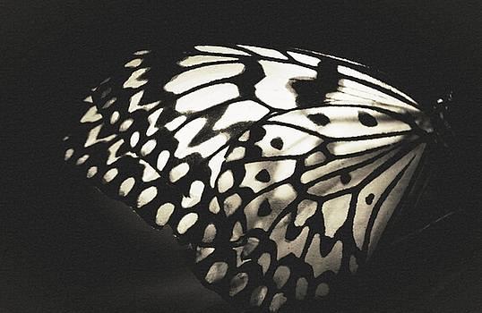 Butterfly Dancer by The Art Of Marilyn Ridoutt-Greene