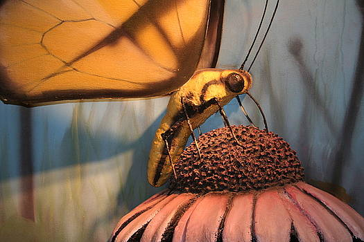 Butterfly Display by Shelly Davis