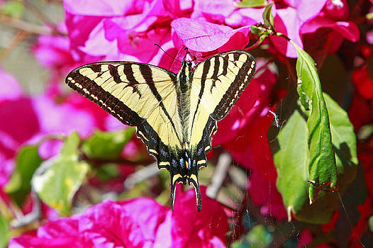 Butterfly Feeding by Shoal Hollingsworth