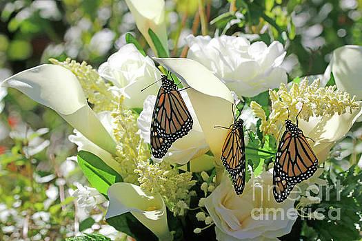 Butterfly Florist Photo by Luana K Perez