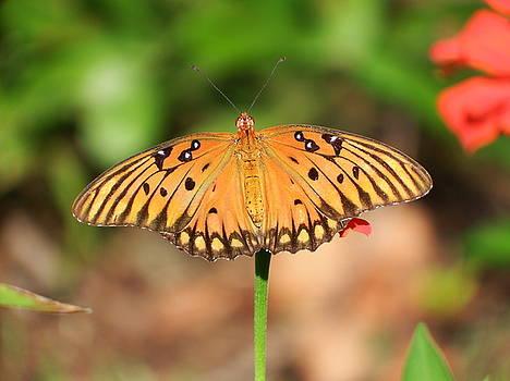 Butterfly Flower by Cathy Harper