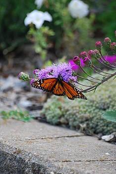 Butterfly Garden by Ramona Whiteaker
