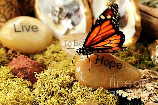 Butterfly Hope Photo by Luana K Perez