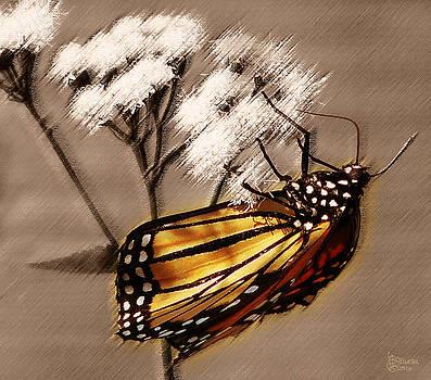Butterfly II by Jeff Breiman