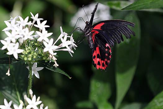 Butterfly III by David Yunker