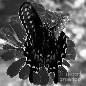 Butterfly in Black and White by Elizabeth Briggs