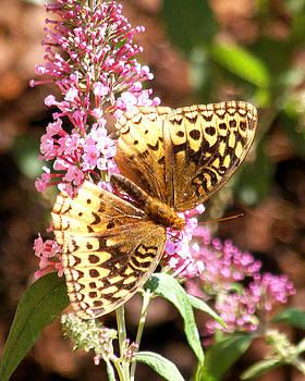 Butterfly in Kentucky by D Winston