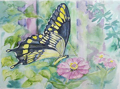 Butterfly in my Garden by Judy Loper