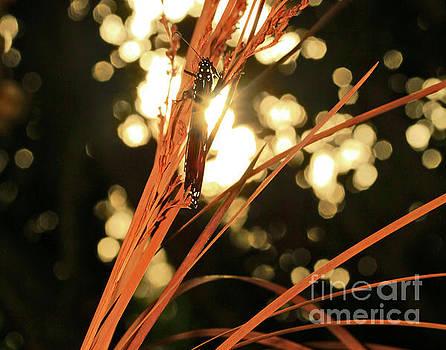 Butterfly in Sunlight on Wheat by Luana K Perez