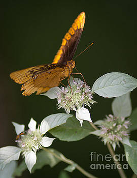 Butterfly in The Cove by Douglas Stucky
