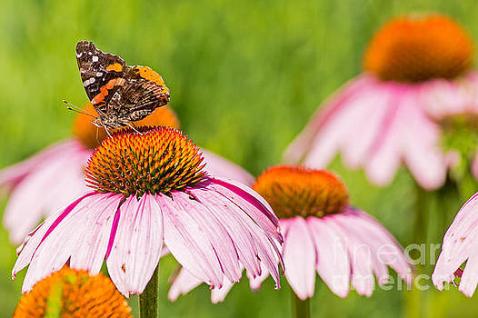 Butterfly in the Refuge by Natural Focal Point Photography