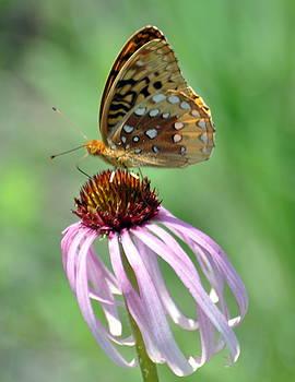 Marty Koch - Butterfly In The Wind