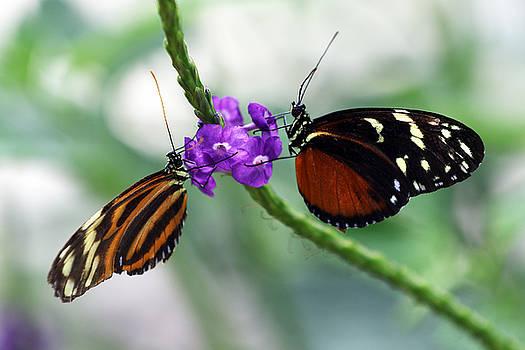 Butterfly IV by David Yunker