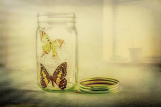 Butterfly Jar by Bob Orsillo