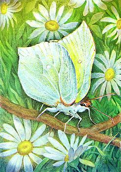 Natalie Berman - Butterfly