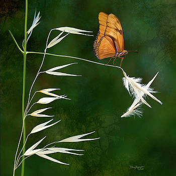 Butterfly on grass by Thanh Thuy Nguyen