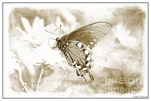 Butterfly on Lantana - Black and White by Debbie Portwood