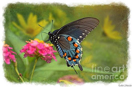 Butterfly on Lantana by Debbie Portwood