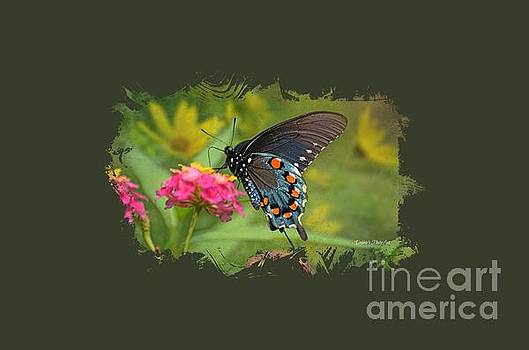 Butterfly on Lantana - Tee Shirt Design by Debbie Portwood