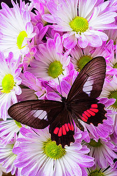 Butterfly On Poms by Garry Gay